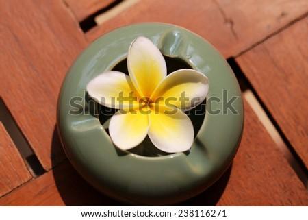 beautiful flower in a vase plumeria photographed closeup - stock photo