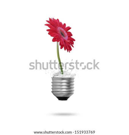 beautiful flower in light bulb  - stock photo