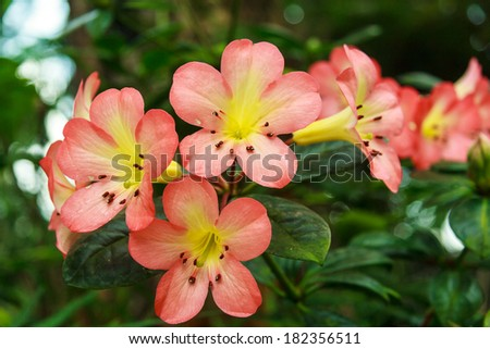 Beautiful Flower In The Forest - stock photo