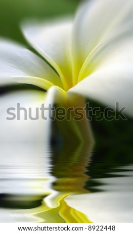 beautiful flower in the water - stock photo