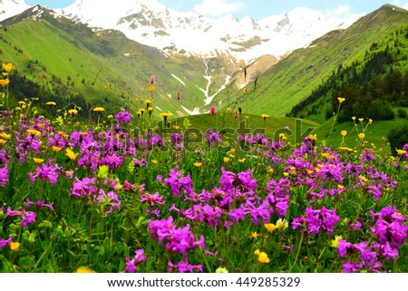 Beautiful flower meadow in Caucasus mountains.  Swaneti, Georgia, Europe.