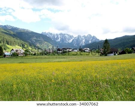 Beautiful flower meadow in Gosau village of  salzkammergu, Austria. - stock photo