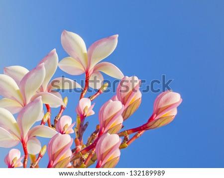 beautiful flower on blue sky background - stock photo