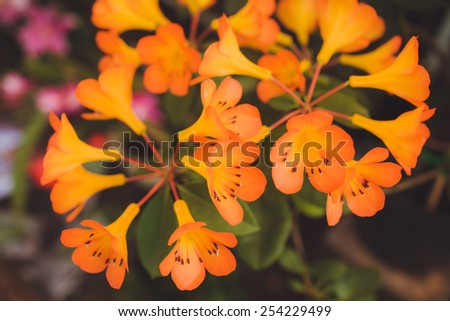 beautiful flower orange  colour outdoors - stock photo