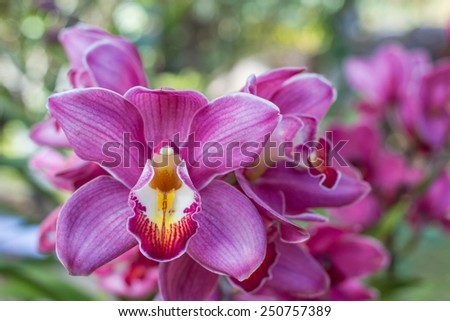Beautiful Flower Orchid close up in garden.