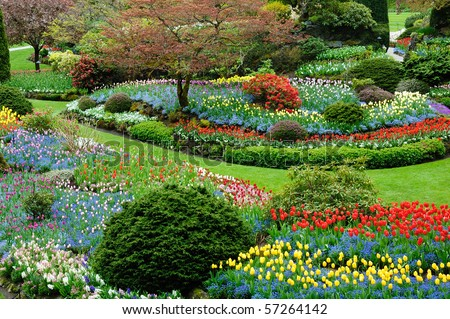 Beautiful flower pattern in spring garden, victoria, british columbia, canada - stock photo