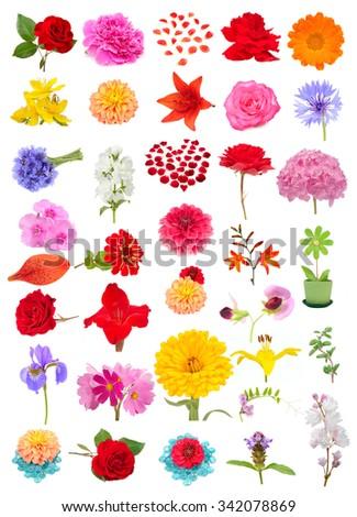 Beautiful flower set including rose, peony, begonia, calendula, lily, cornflower, jasmine, hydrangea, phlox, zinnia, crocosmia, gladiolus, pea, iris, cosmos, prunella, fuzzy deutzia isolated on white - stock photo