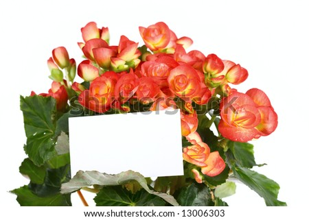Beautiful flower with a card for the text - stock photo