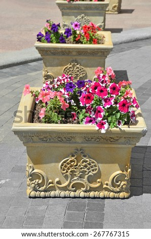 Beautiful flowerbed with many bright petunias flower - stock photo