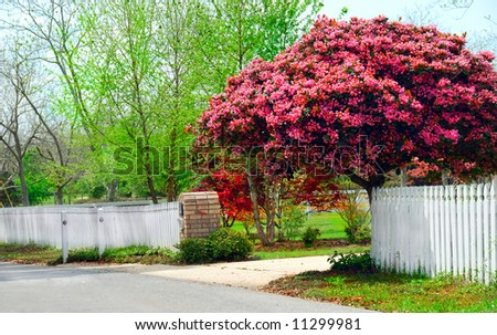 Beautiful flowering trees and new spring growth - stock photo