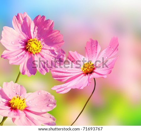 Beautiful flowers - stock photo