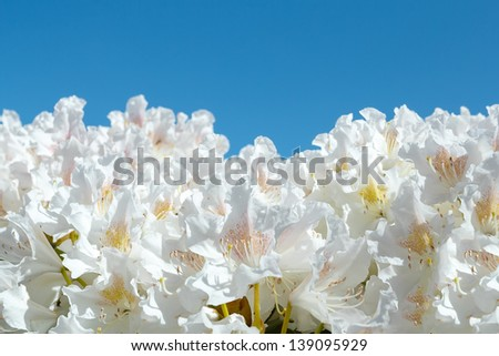 beautiful flowers against blue sky with space for text