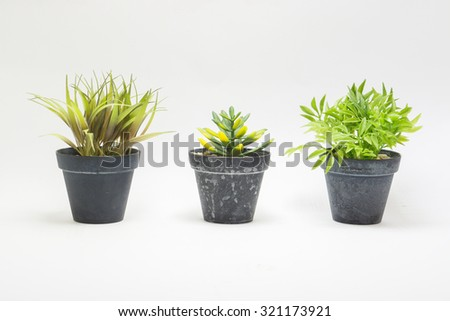 Beautiful flowers and ornamental plants  in flowerpots on white