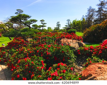 Beautiful Flowers And Trees In Japanese Garden.