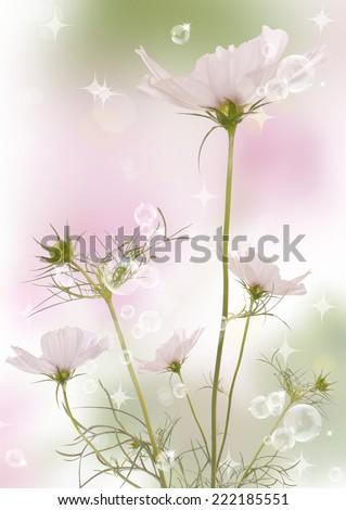 Beautiful flowers background - stock photo