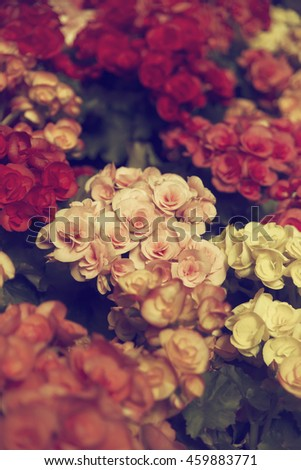 Beautiful flowers background with vintage filter.