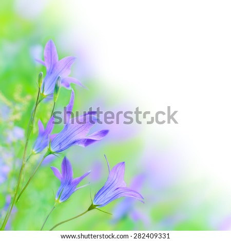 Beautiful Flowers bells Border.Floral design over white. - stock photo