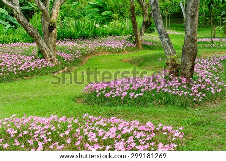 Beautiful flowers blooming in the garden. - stock photo