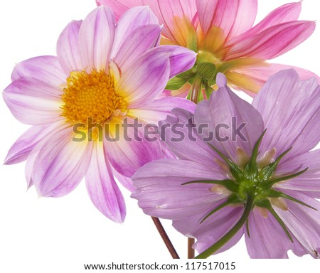 Beautiful flowers card.Floral background - stock photo