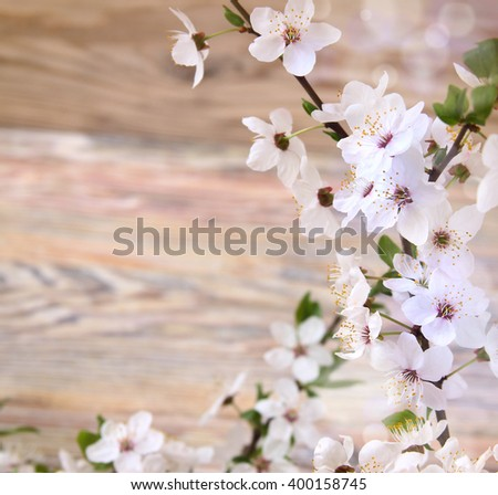 beautiful flowers cherry on a wooden background