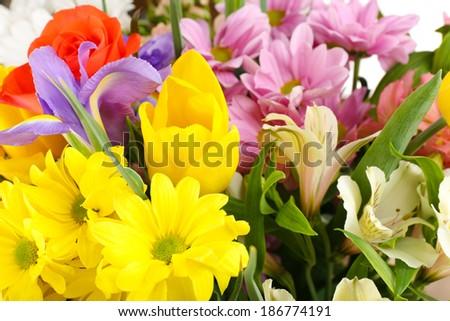 Beautiful flowers close up - stock photo