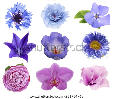 Beautiful flowers collage - stock photo