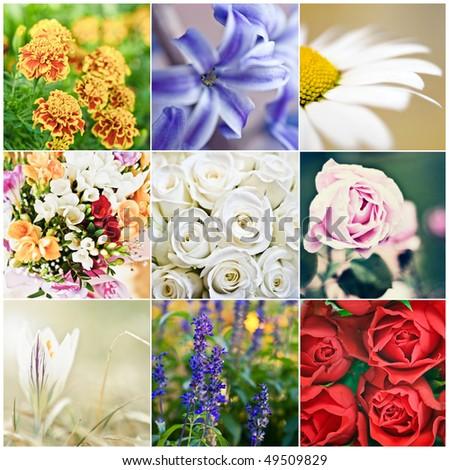 beautiful flowers collage of nine photos - stock photo
