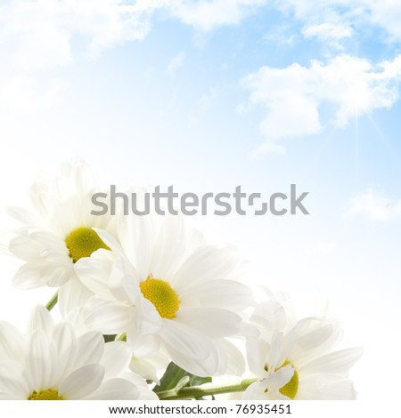 Beautiful flowers daisies against sunny sky with clouds - stock photo