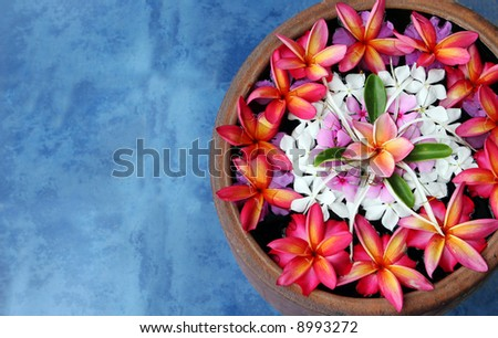 Beautiful flowers floating in water. Taken in tropical Thailand. - stock photo