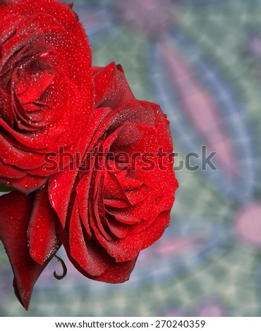 Beautiful flowers. Fresh red roses with drops of dew. - stock photo