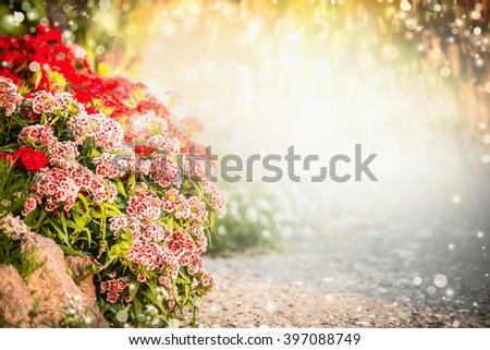 Beautiful flowers garden background. Turkish carnation flowers on flowers bed. Outdoor garden or park background - stock photo