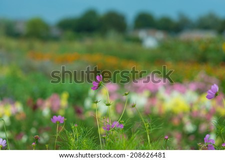 Beautiful flowers in a garden - stock photo