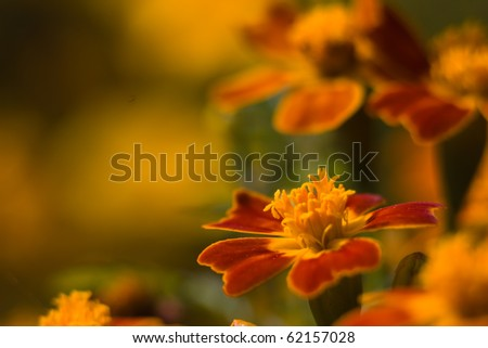 beautiful flowers in close-up - stock photo