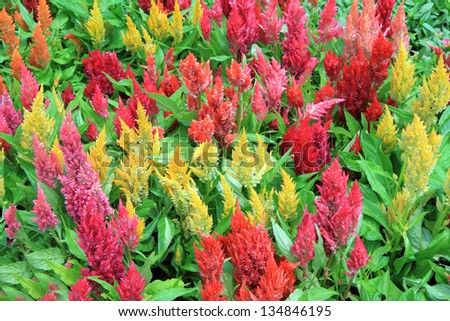beautiful flowers in garden - stock photo