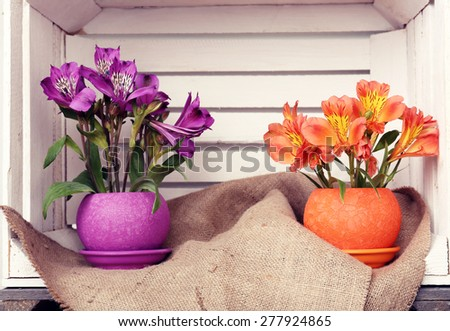 Beautiful flowers in pots in wooden crate - stock photo