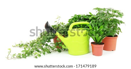 Beautiful flowers in pots isolated on white