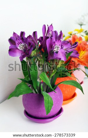 Beautiful flowers in pots on light background - stock photo