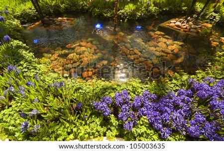 Beautiful flowers in the garden. - stock photo