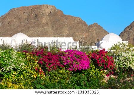 Beautiful Flowers in the garden in Muscat, Oman - stock photo