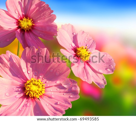 Beautiful flowers in the morning - stock photo