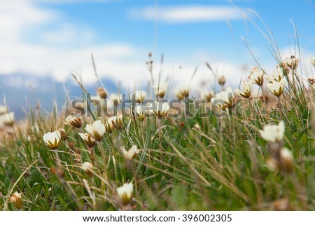 Beautiful flowers in the spring steppe - stock photo