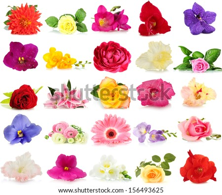 Beautiful flowers isolated on white - stock photo