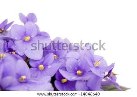 beautiful flowers isolated on white background - stock photo