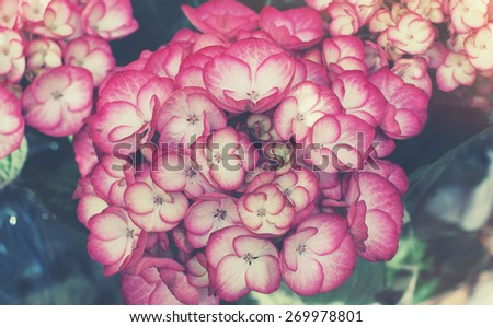 beautiful flowers made with color filters. and softlight - stock photo