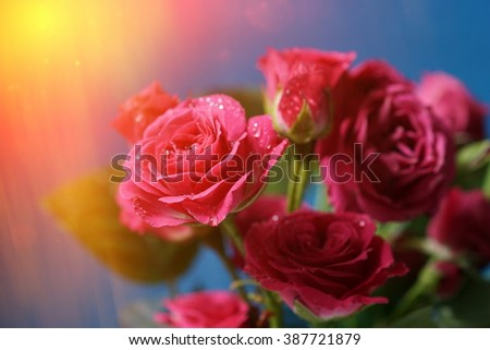 Beautiful flowers made with color filters. Bouquet of roses on the blue background - stock photo
