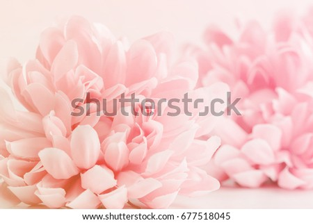 Beautiful flowers made with color filters in soft color and blur style