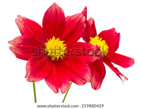 beautiful flowers on a white background - stock photo