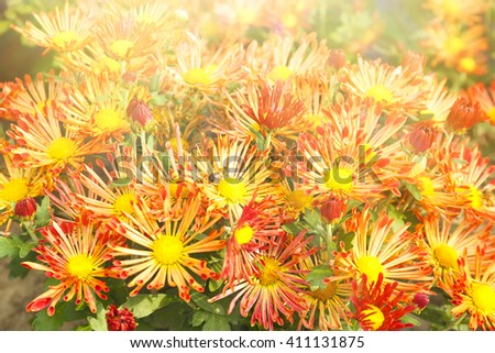 Beautiful flowers on meadow with sunlight - stock photo