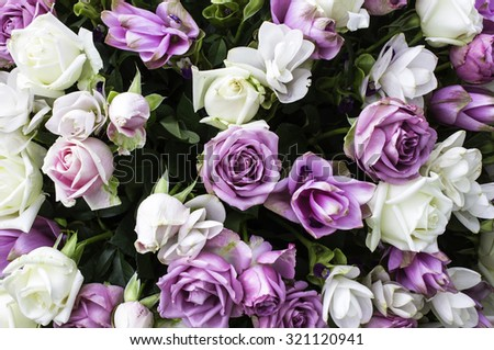 beautiful flowers roses - stock photo