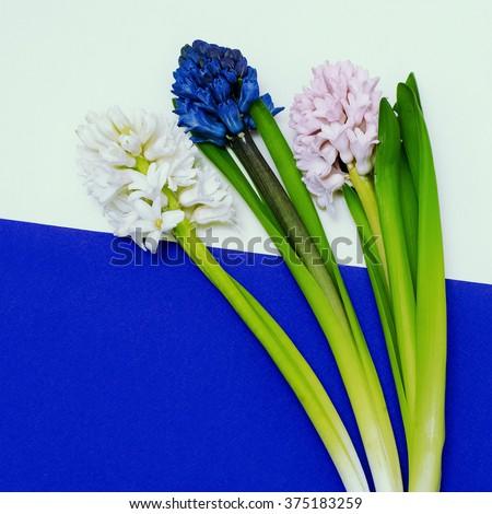 Beautiful Flowers set. Minimalism Design Fashion - stock photo